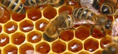 Пчелиная продукция лекарство